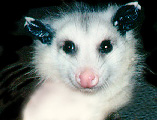 Awesome-possum.com world class promotion services.